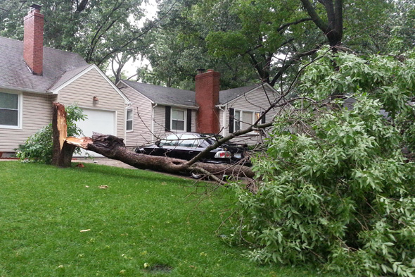 The tree that fell on 72nd Street.
