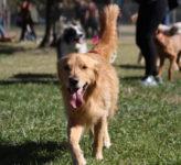 Mission: Dog Park