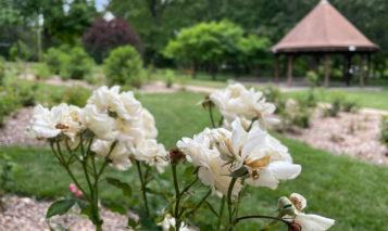 Antioch Park Rose Garden