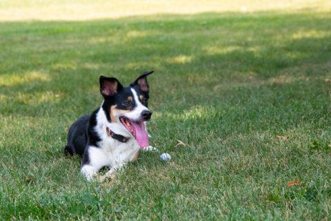 Prairie Village dog