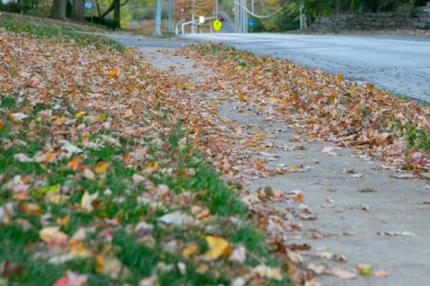 Johnson County leaf removal